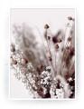 Plakat / canvas / akustik: Flower 1 (Earth)