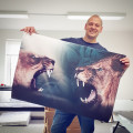 Poster / Canvas / Acoustic: Lions (Animals)