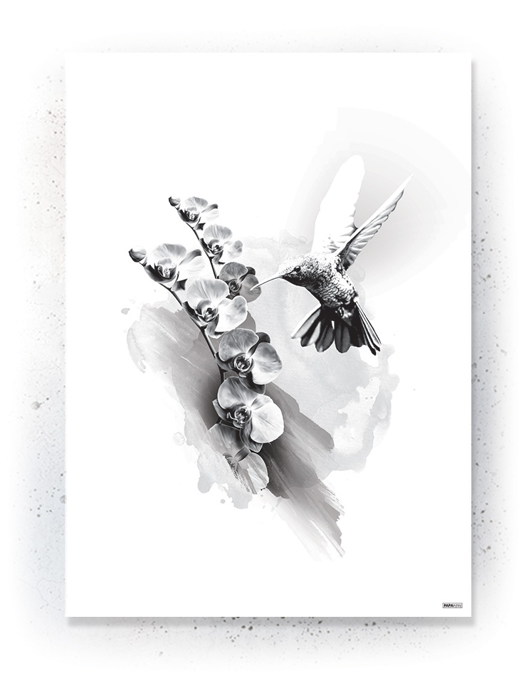 Plakat / Canvas / Akustik: Kolibri og orkide (Black)