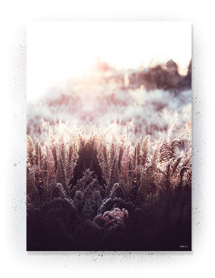 Plakat / Canvas / Akustik: Morgen stund (Withered)
