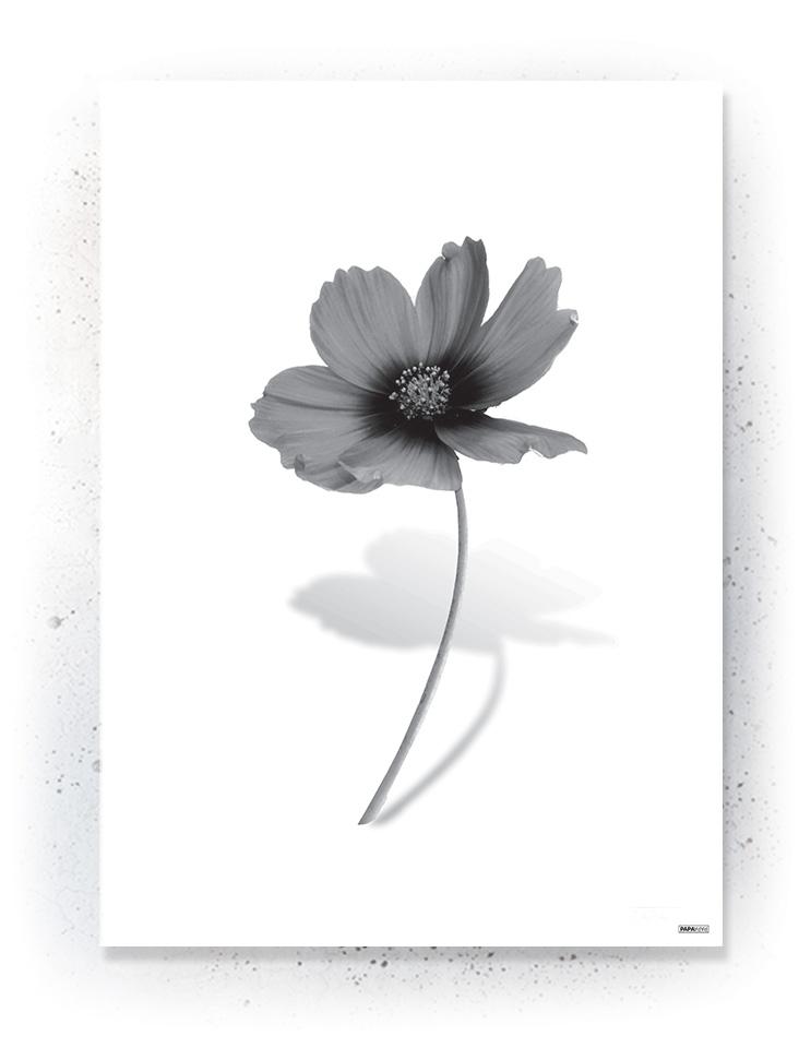 Plakat / Canvas / Akustik: Blomst /sort(BLACK)