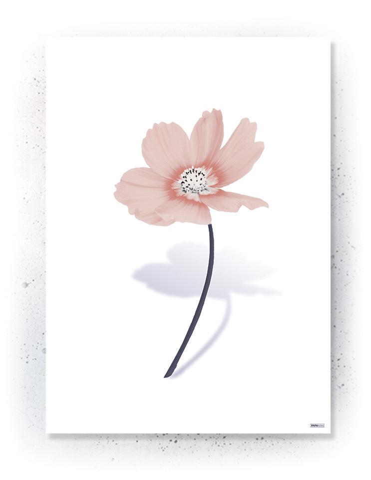 Plakat / canvas / akustik: Simpel blomst hvid (MIDSOMMER)
